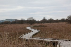Boardwalk at Pollardstown Fen