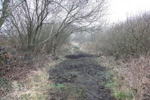Boggy path at Ballinafagh