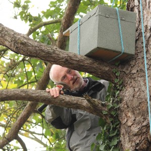 Erecting a Kestrel Nest Box