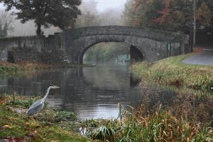 Heron at Tandy's Bridge