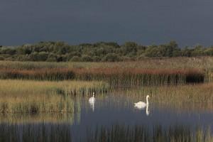 Ballinafagh Lake